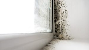 how to keep mold from coming back